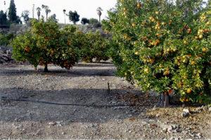 crown-orangegroves